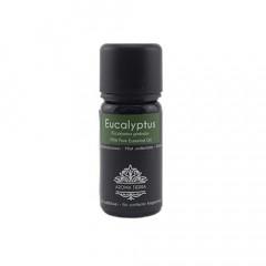 Eucalyptus Aroma Essential Oil 10ml