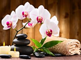 Beauty and Wellness - Hyjiya Store