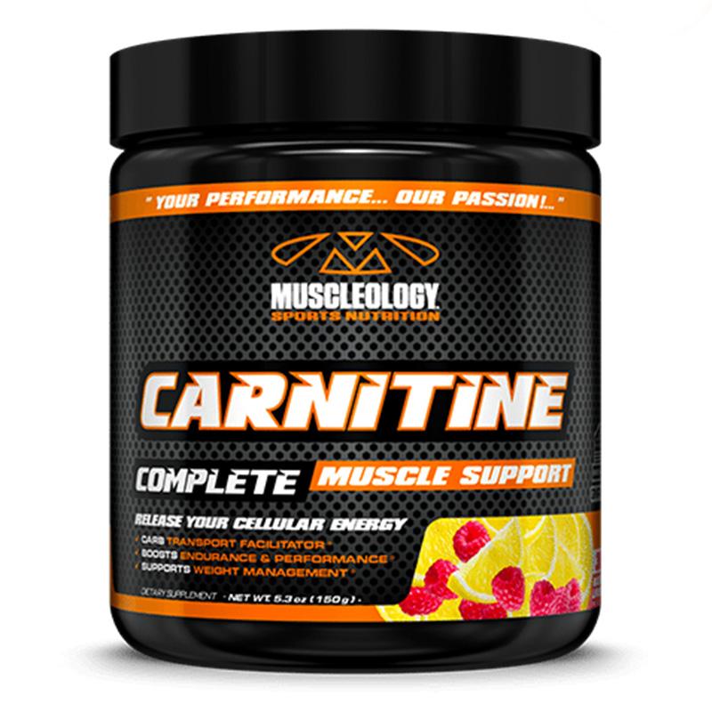 Buy Muscleology Carnitine Powder 150 gm in Dubai, Abu ...